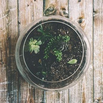 Fabriquez votre terrarium pour vos aromates !